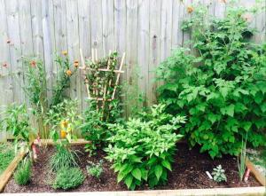 garden 04Aug14